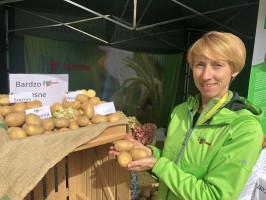 Anna Piotrzkowska z HZ Zamarte twierdzi, iż tegoroczne plony bulw ziemniaka w części lokalizacji będą niskie bądź średnie, ale wysokiej jakości (fot. JŚ-S).