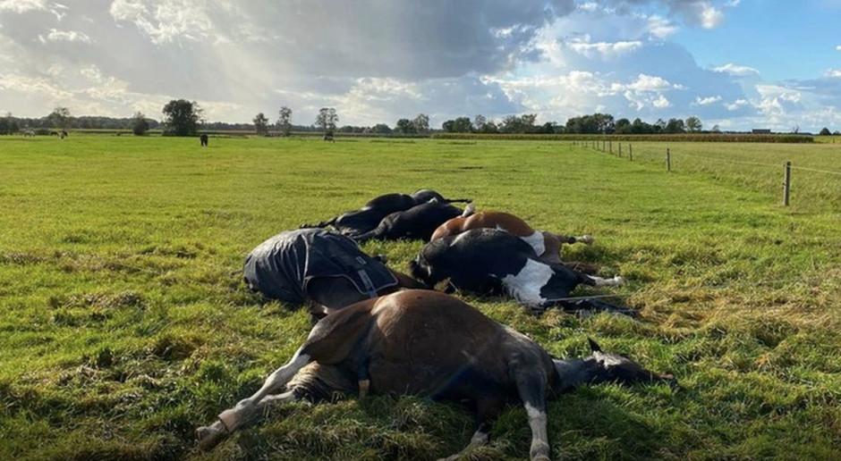 Piorun zabił na pastwisku siedem koni