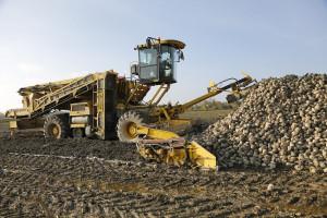 Rosja: Wyższa produkcja cukru w sezonie 2021/2022