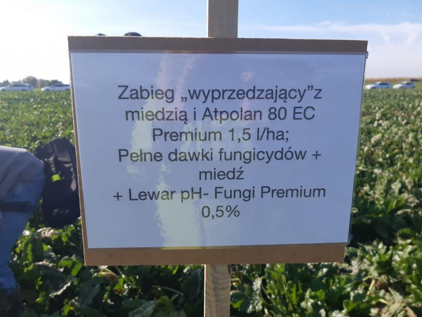 Złożony program ochrony bazujący na fungicydach, adiuwantach oraz działającej kontaktowo miedzi. Fot. A. Kobus