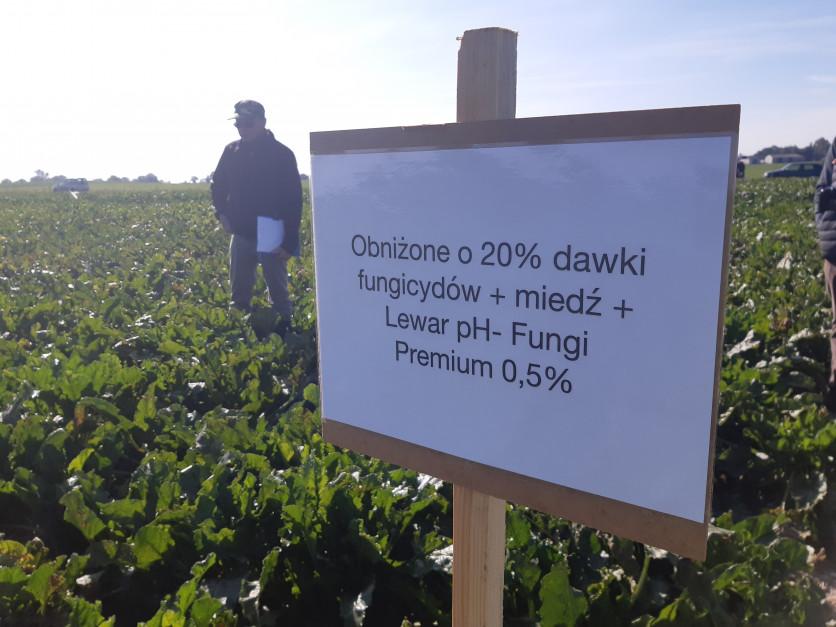Dobrze dobrany adiuwant może pozwolić na obniżenie dawek fungicydów, co jest zgodne z założeniami Zielonego Ładu Fot. A. Kobus