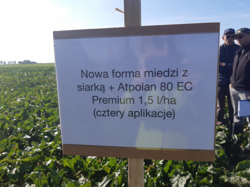 Wprowadzenie nowych formulacji miedzi do programu ochrony ma jeszcze bardziej podnieść jego skuteczność Fot. A. Kobus