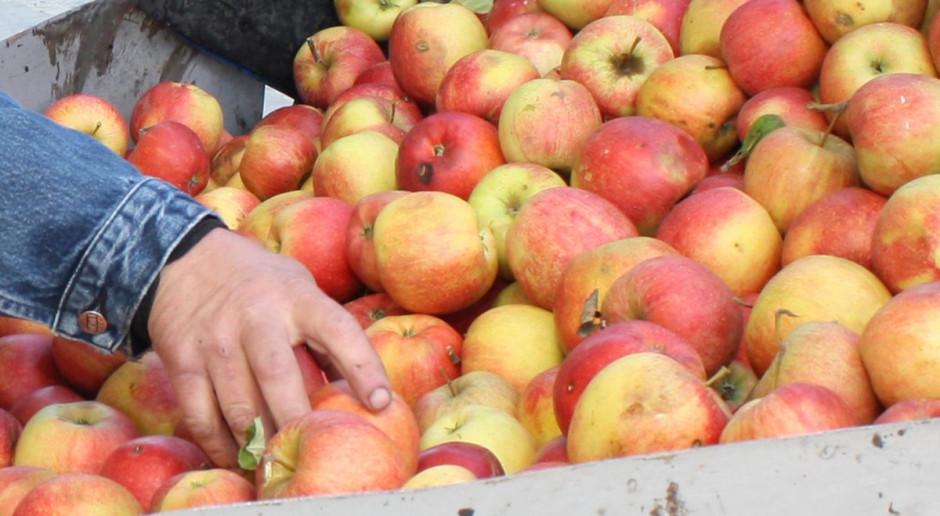 Cenowa samowola w skupach jabłek
