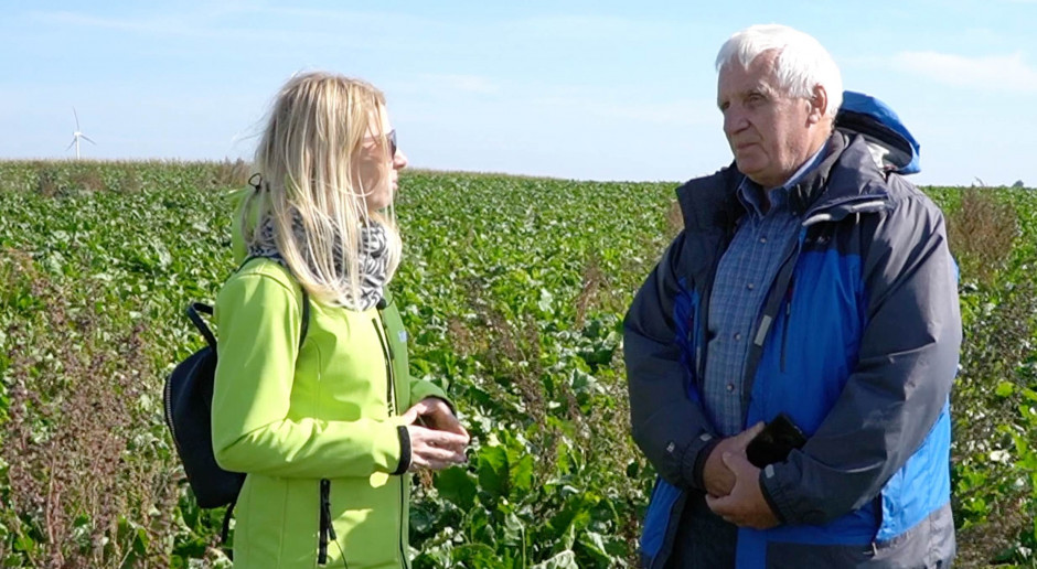 Jak rolnicy poradzili sobie z odchwaszczaniem buraków bez desmedifamu?