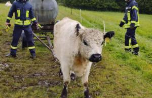 Ratownikom udało się uwolnić zwierzę z pułapki, Foto: Straż Pożarna Brandoberndorf