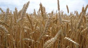 Po ile powinna być pszenica przy tych cenach za nawozy?