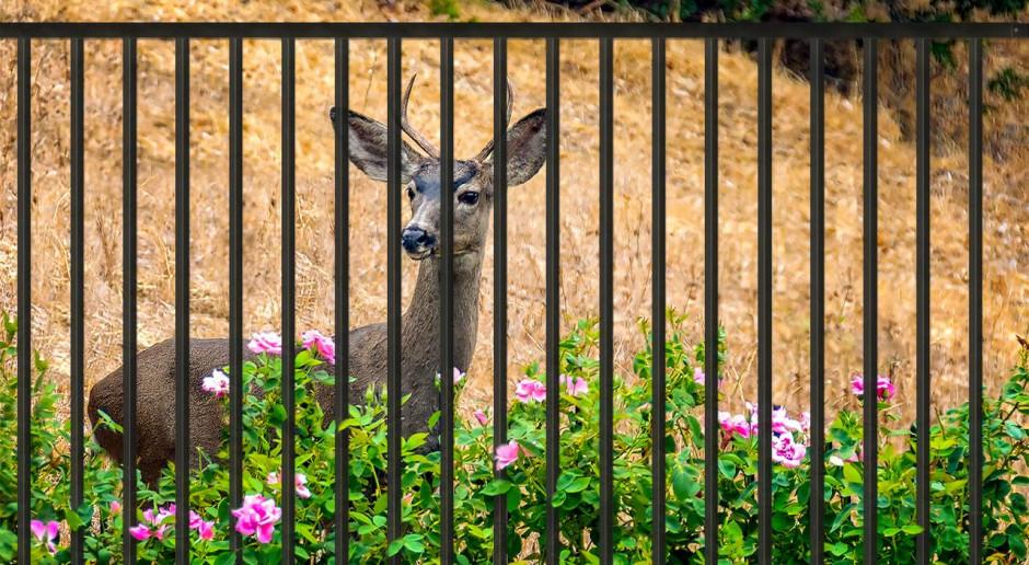 Skuteczne ogrodzenie domu przed dzikimi zwierzętami