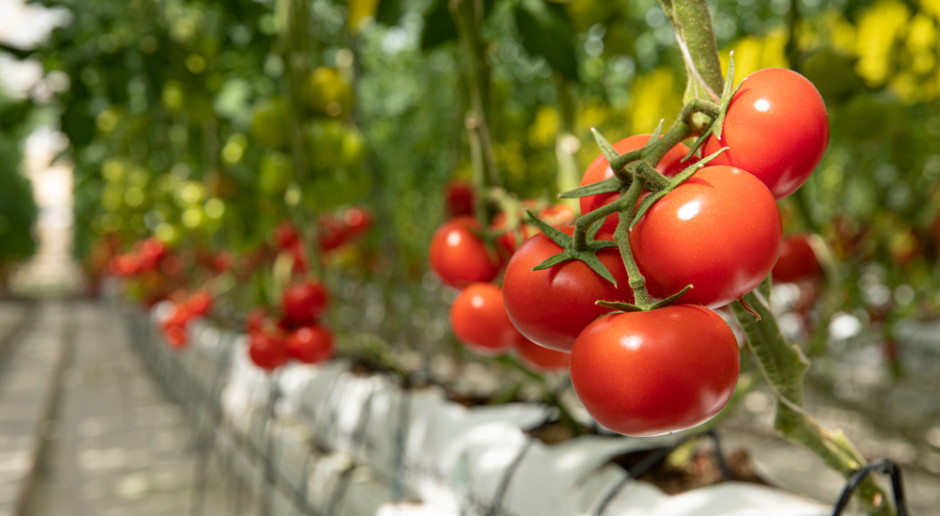 FBZPR: Rosnące koszty produkcji rolnej podważają sensowność jej kontynuowania
