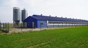 Bioasekuracja gospodarstw trzody chlewnej - jak robić to skutecznie?