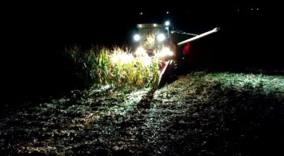 Kukurydza - nocne koszenie Bizonem