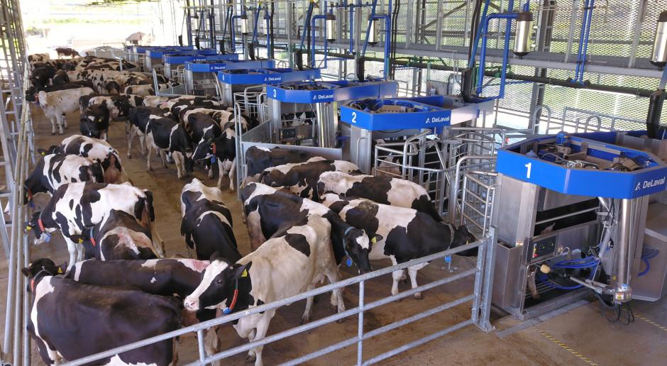 Nowa koncepcja automatycznego doju dla dużych gospodarstw mlecznych