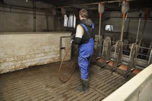 Działanie i stosowanie środków do dezynfekcji - czyli efektywna bioasekuracja