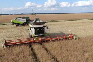 Uprawa, odmiany, nawożenie, plony rzepaku - żniwa w Agro-Farm, cz.2