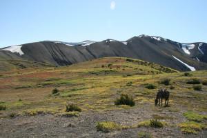 Kanada: Indiańskie konie przetrwały dzięki hodowcom, wbrew urzędnikom