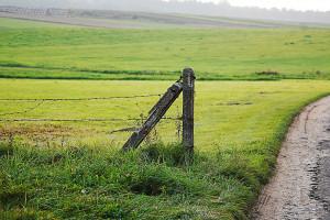 W ciągu roku KOWR zagospodarował 1613 ha wyłączonych z dzierżaw
