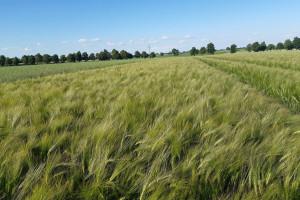 Ochrona roślin kontra Zielony Ład – nadzieje pokłada się w innowacjach