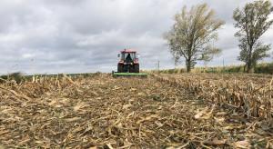 Po zbiorze kukurydzy nie pozwól przezimować omacnicy