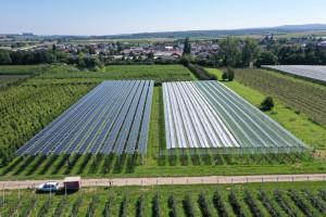 Agrofotowoltaika nie tylko ochroni uprawy przed suszą